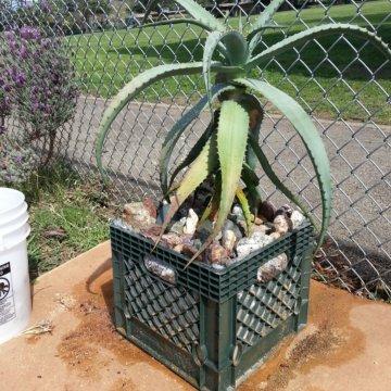 milk crate planters - Milk Crate Garden